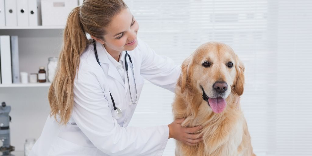Vet care costs in Dallas and around the globe can be tricky. They can pop up out of nowhere and derail our finances if we aren't careful. Here are some tips to help you be prepared along with some recommendations for a Dallas veterinarian!